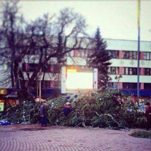 Новогодняя ель рухнула в Ивано-Франковске