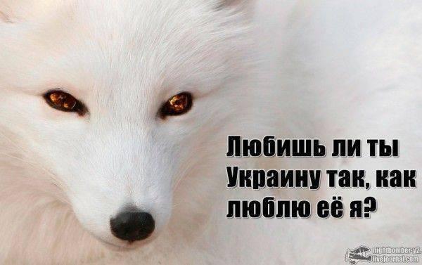 Час Х в украинском сортире. Прогнозы 2014 года