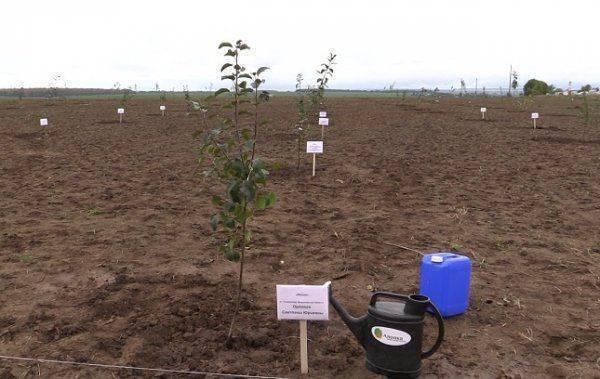 Во Владимирской области впервые за 30 лет заложили фруктово-ягодный сад