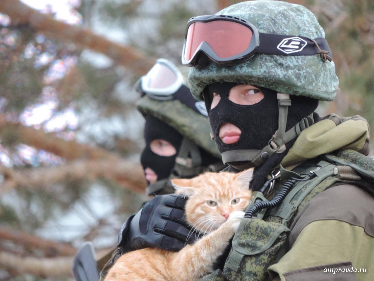 По ситуации с котом, докладываю