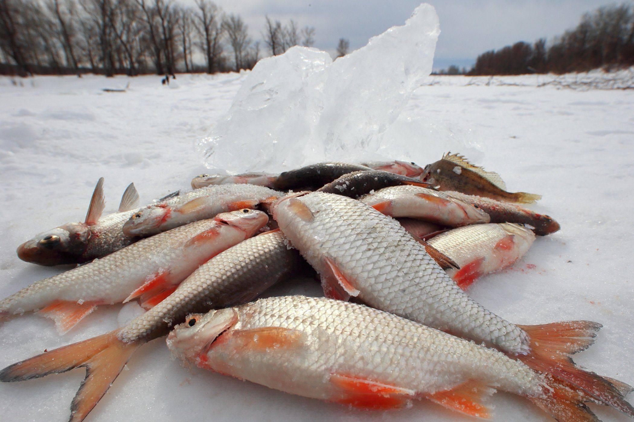 как и почему правительство россии хочет запретить любительскую рыбалку