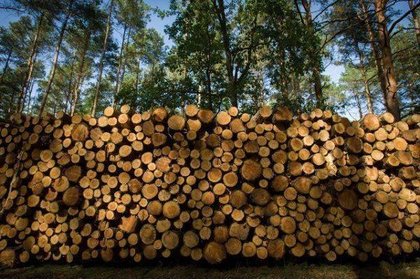 Продано: Украина отдает свои леса за бесценок