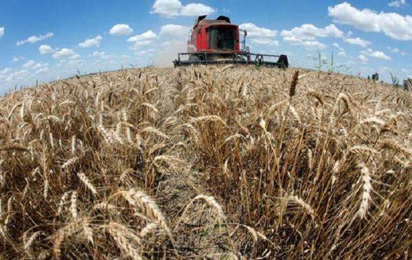 Киев в бешенстве: российские бизнесмены покорили аграрный рынок Украины