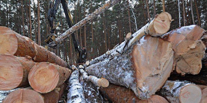 Украина идет лесом