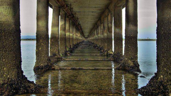 Керченский мост атакован медузами-мутантами