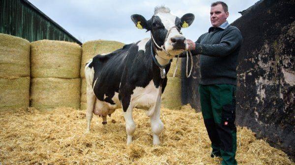 Молочные войны: Потребитель будет крайним