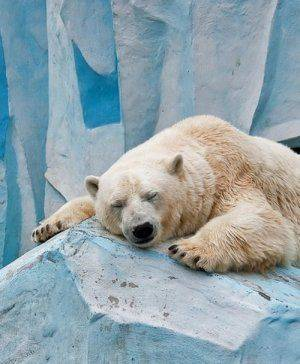 Почему Русская Арктика и Северный морской путь должны стать «свободными»?