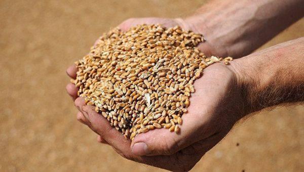 Без хлеба и зрелищ. Украинцам предрекают рост цен на главный продукт