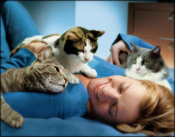 Как наличие кошки влияет на продолжительность жизни человека