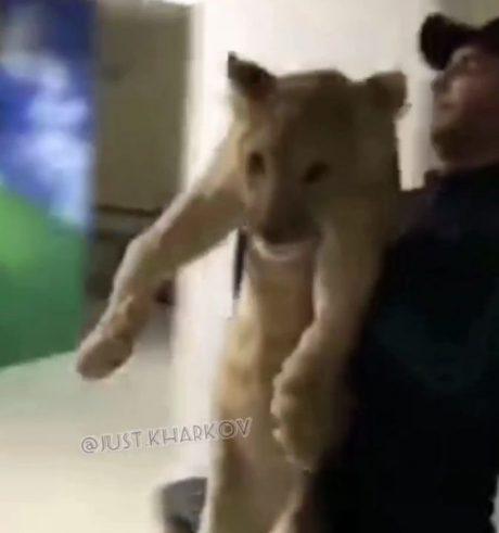 В Харькове по торговому центру разгуливал львенок