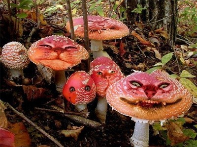 Чернобыльские грибы помогут основать колонии на Марсе и других планетах